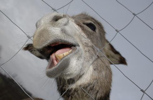 donkey-1062669_1280