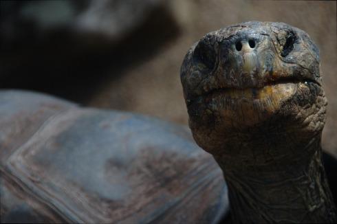 turtle-1149009_960_720